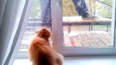 Коту страшно при виде рабочего