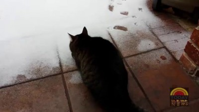 Cat reaction to snow - Excitable Cat Sees Snow for the first time! [HILARIOUS]