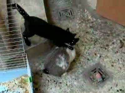 Кролик поимел кошку