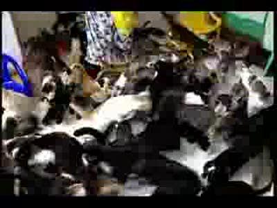 кормежка кошек