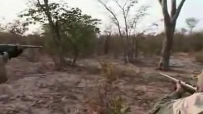 лев напал на охотника