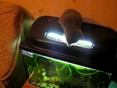 Кот на рыбалке 1