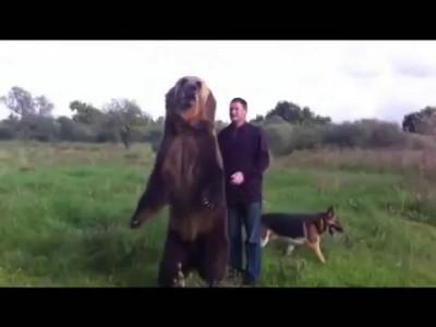 Дрессированный медведь(trained bear)