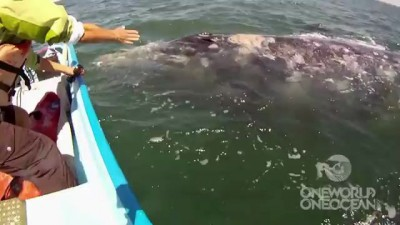 Incredible Whale Encounter