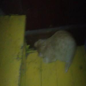 Котенок и мышь