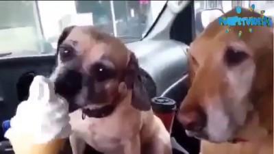 Большой и маленький щенок едят мороженное