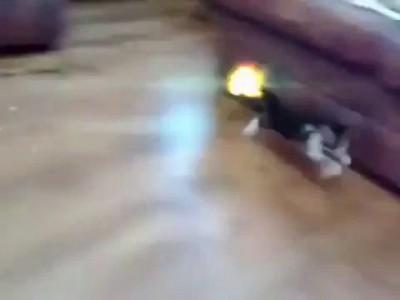 ящерица с котом