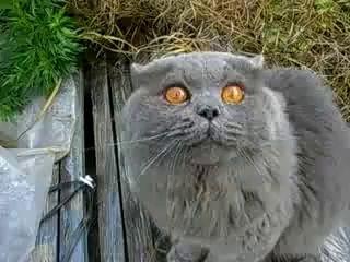 кот говорит открой глаза)))