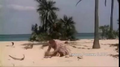 Синьор Робинзон: 04. Битва с кокосом