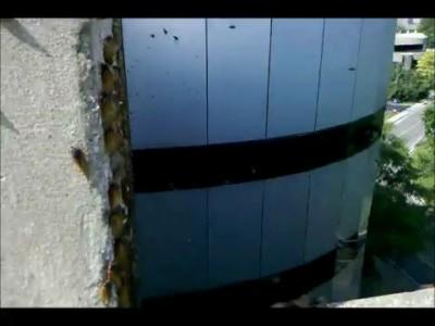 Нашествие насекомых в Нешвилле
