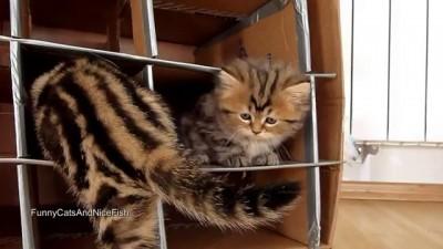 Cute Kittens vs. Handmade Fort