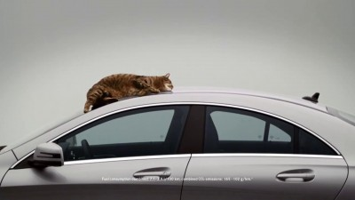 Кот и машина