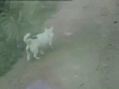 находчивая собака 2