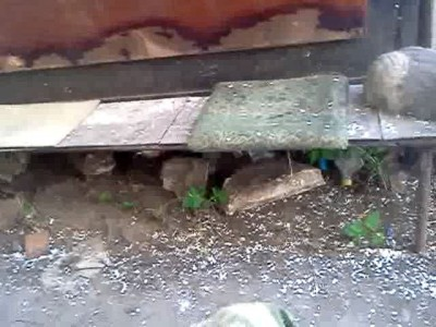 Кошачья ху..ня