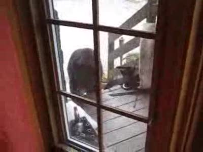 Как медведь еду тырил