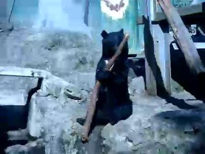 Кунг-фу в стиле медведь