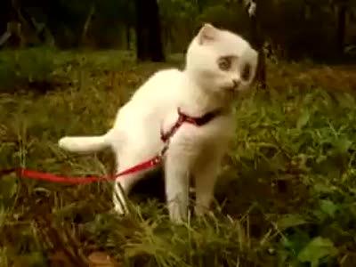 Кот в шоке!