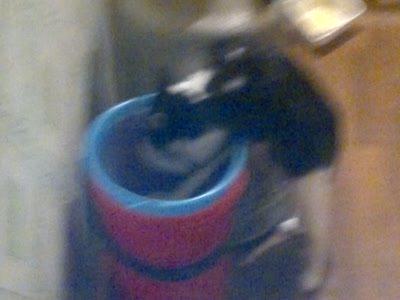 Кот и ведро