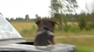 Персональный люк для собаки