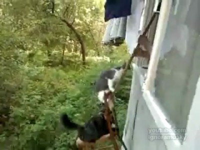 Cat-lift: Russian Edition (Кошачий лифт по-русски)