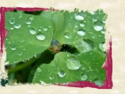 ჯანსუღ კახიძე - ჟუჟუნა წვიმა მოვიდა