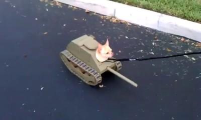 Собака в танке