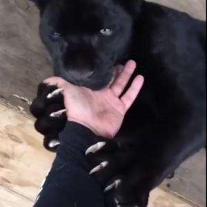 Дай палец...