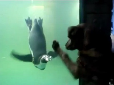 Dog Wants To Play With Penguin