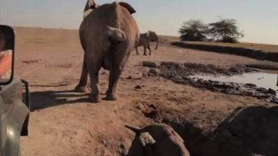 Спасли слонёнка