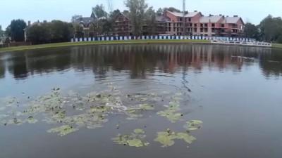 Еще одно видео сазана в пруду Калининграда