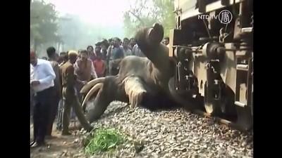 Слон попал под поезд в Индии .