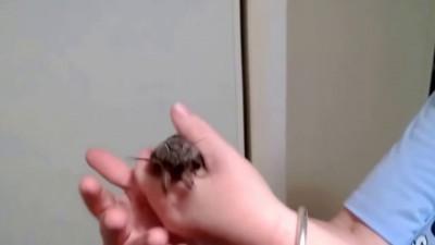 Гигантский мотылек