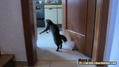 День из жизни кота Неро