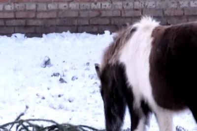 Пони - зима,мороз