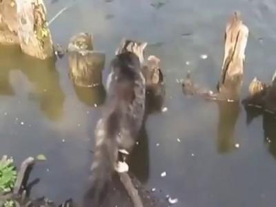 Кот ловит рыбу )