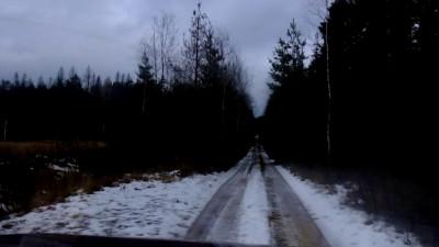 Лесная дорога в декабре