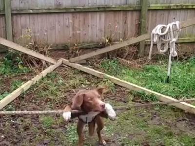 Amazing Acrobatic, Rope balancing Dog