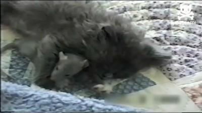 Котёнок и крысёнок - друзья навек!