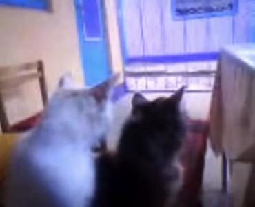 Кошка вылизывает котёнка