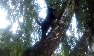 Собака которая любит деревья.