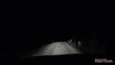 Dash cam Kangaroo attacks car
