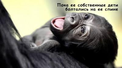 Доказательства, что у животных есть душа.