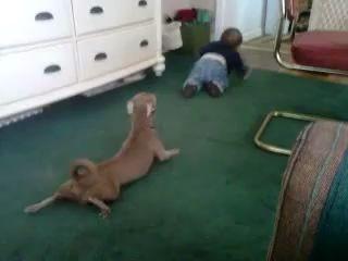 Пёс пародирует ребенка
