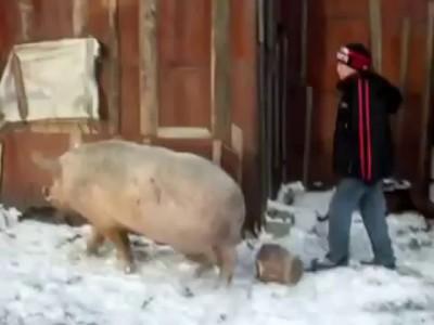Прикол в деревне. Верхом на свинье.