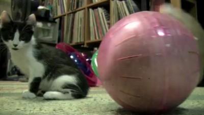 Сферический кот (не в вакууме)