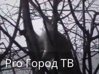 Из зоопарка в Йошкар-Оле сбежала обезьяна