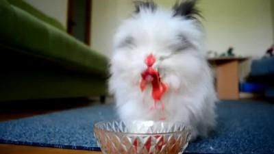 Rabbit Eating Strawberries & Cherries (Cute Rabbit Eating Raspberries)