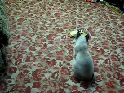 Кошачий испуг
