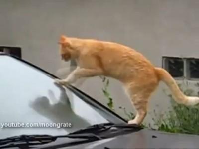 Кот - стеклоочиститель