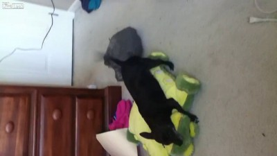Любимая игрушка собаки